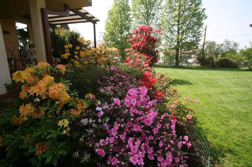 Vivaista piante e fiori padova e venezia for Progettazione aiuole
